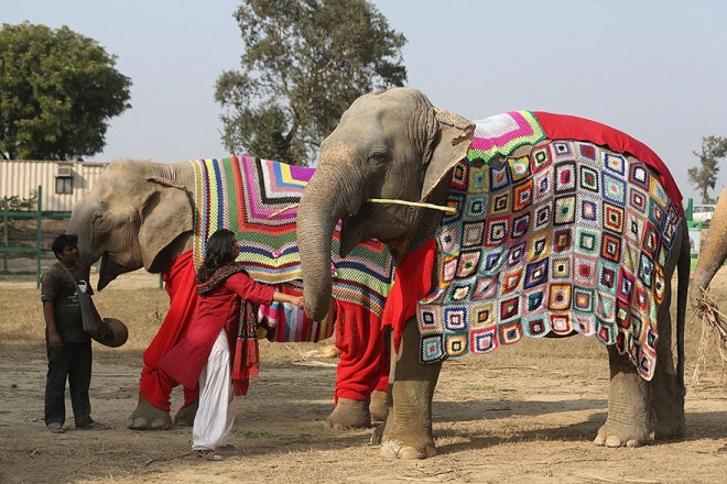 f2872dff8bb5 Knit giant sweaters for rescued elephants!