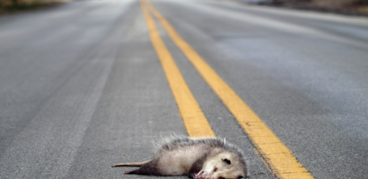 roadkill-driving-crash.png