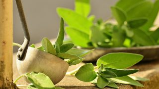 Gargle With Sage To Stay Healthy In Winter