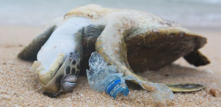 sea-turtle-plastic.jpg