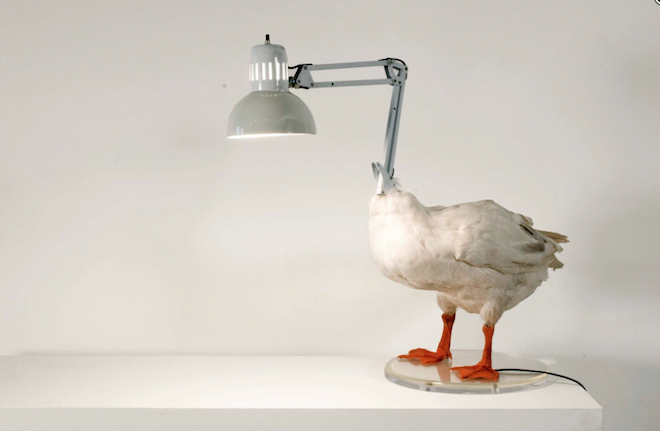 Radical recycling: a chicken is now a lamp | Green Prophet