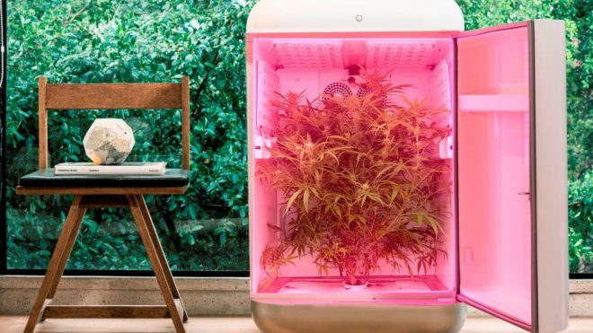 seedo grow box, container farms for cannabis