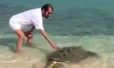 Middle East sheik takes a turtle for a swim