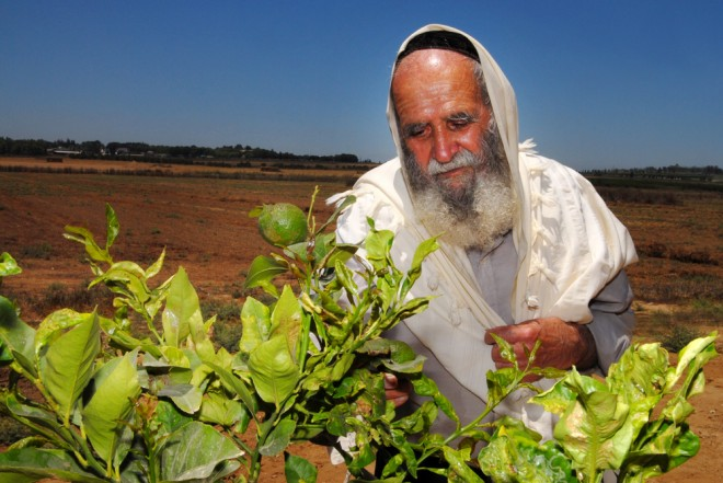 Shmita year in Israel sabbath for the land
