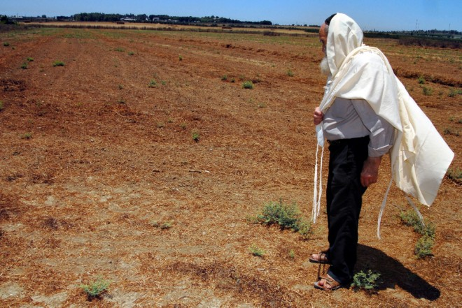 shmita year in Israel, when the land rests