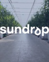 Sundrop Farms Grows Tomatoes With Seawater