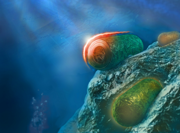 Scientists discover bacteria's natural sunscreen