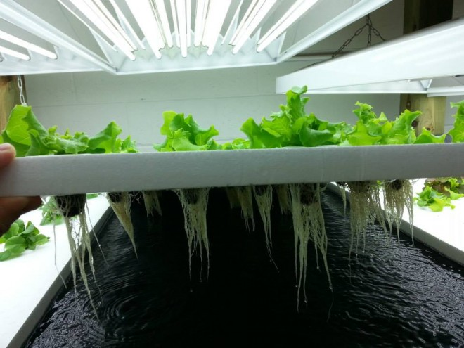 upstream-aquaponics