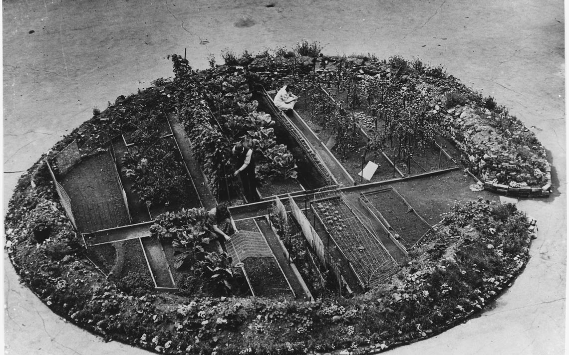 bomb crater, victory garden in London