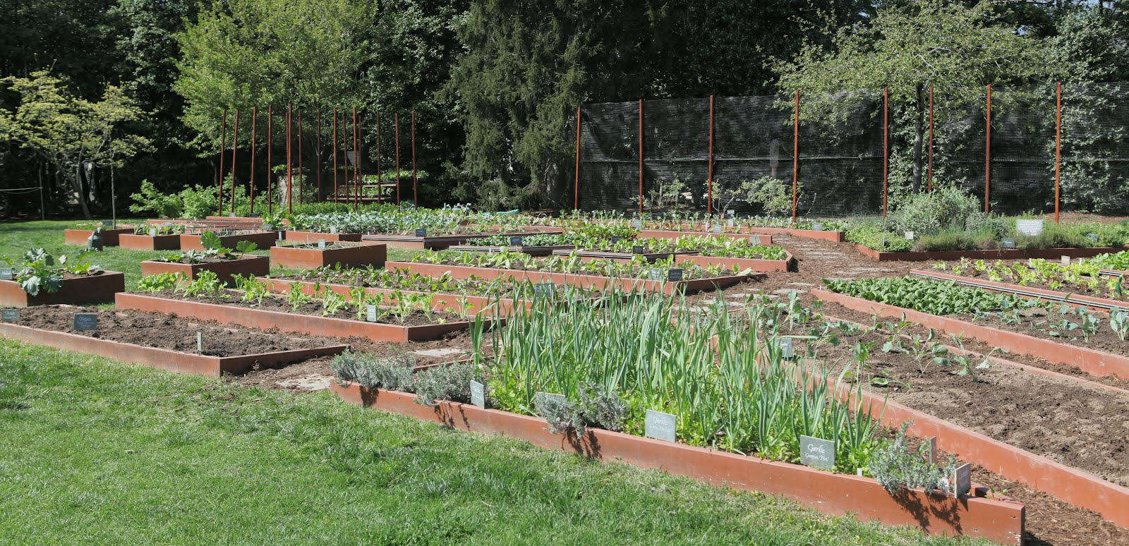 White House Kitchen Garden Michelle Obamas White House Garden Will Grow On Huffpost
