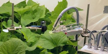 Plants give biofeedback to optimize their own light levels in hydroponics