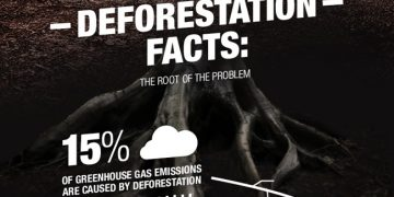 Deforestation quick facts for desert dwellers