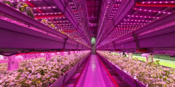 Chicago's urban farming produces fresh veggies all year, 24/7