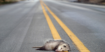 This popular app helps you report roadkill to save the wild