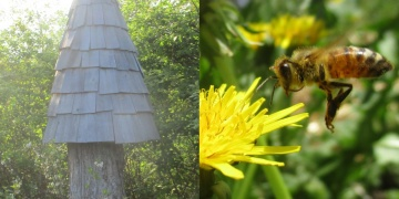 In Canada, PieBird gives honeybees sanctuary