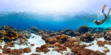 The Great Reef is recovering