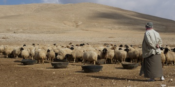 Erratic weather toll on Syria's agricultural output making conflict worse