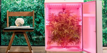 Sodastream's CEO raises $4 million for cannabis grow company Seedo