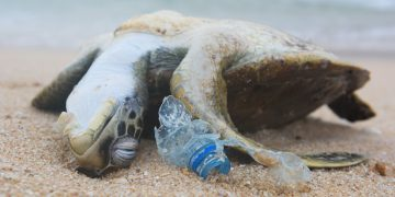 Gulf oil and chem companies educate on plastic problem