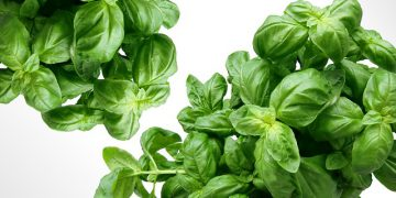 5 Ways To Use Up Your Basil Crop