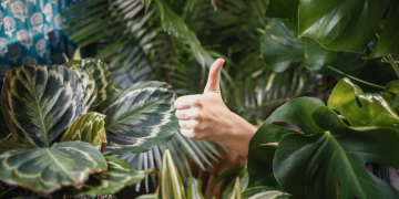 indoor houseplants, thumbs up