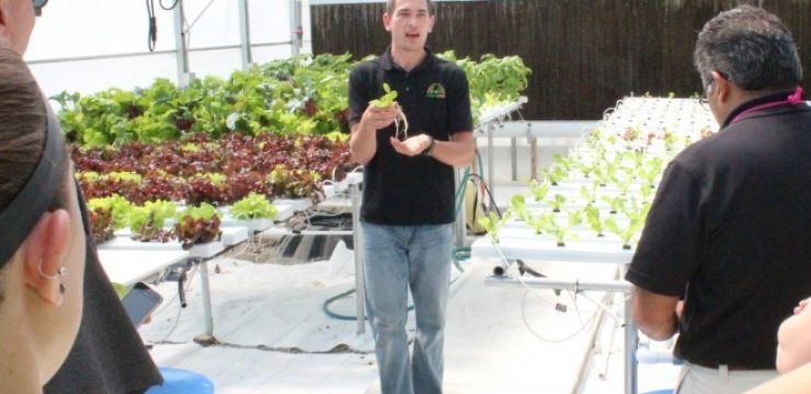 workshop-crpking-hydroponics.jpg