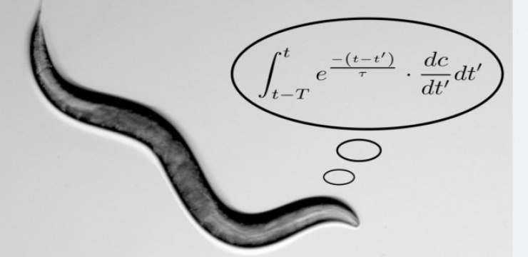 worms-perform-math.jpg
