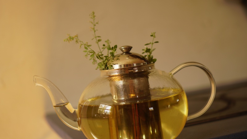 Tea for royalty starts with white-leaved savory or Zuta Levona